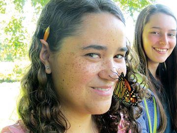 Nosy butterfly
