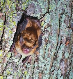 Lennox Addington Stewardship Council hosts a batty evening on Amherst – Image 1