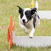 14th annual Dog Days of Scugog
