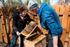 Cities becoming sweet spot for bees-Image1