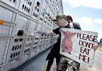 Dozens protest treatment of pigs brought to Burlington plant for slaughter