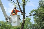 Milton tops up emerald ash borer strategy budget as trees continue to deteriorate