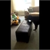 Funny pet video of the day: Harley chases Lawson for his treat