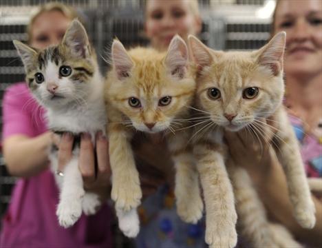 Humane Society Cats Cambridge