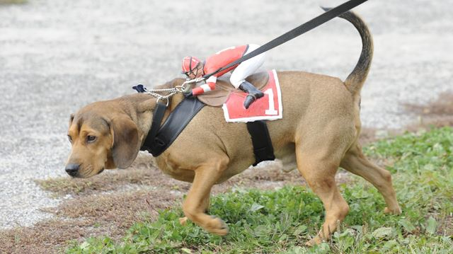 Dog Rescue Inc Oakville