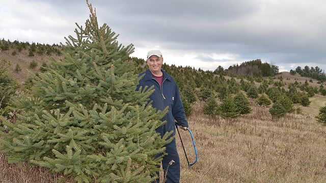 Somerville Christmas Tree