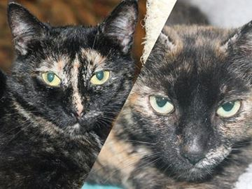 These girls have waited far too long for a forever home