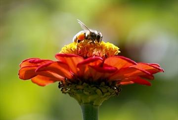 ZomBee Watch helps scientists track honeybee killer-Image1