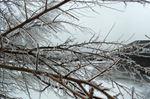 Ice-covered tree
