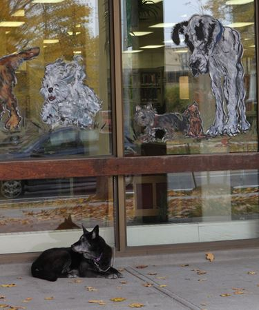 Dog days at library