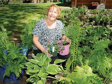 Barrie Garden Club plant sale set for Saturday