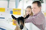 Country life, animals, hockey focus of Barrie Fair