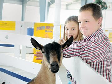Country life, animals, hockey focus of Barrie Fair
