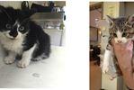 BB pellet found in 5-week-old Courtice kitten