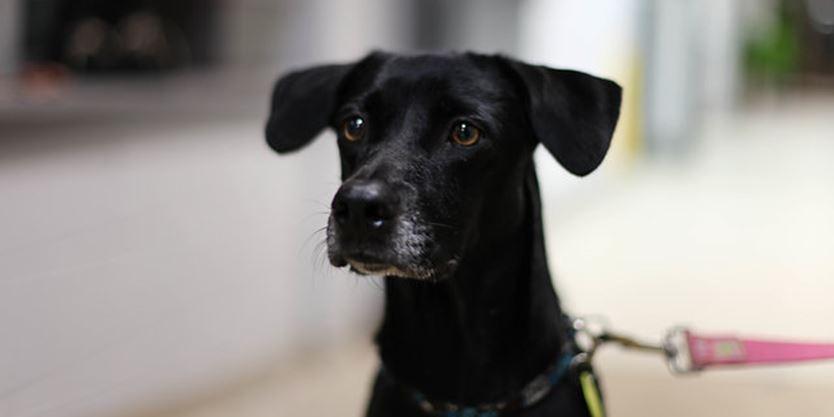 Adopt A Dog Toronto Free