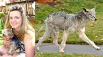 Dog killed in suspected Coyote attack