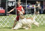 Kilbride and District Kennel Club's All-Breed Championship Dog Show