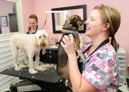 Cassie S Dog Grooming Pet Supplies