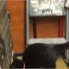 Adopt A Pet: Suzette needs a home