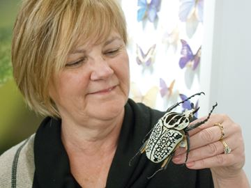 Butterfly Conservatory has the buzz on bugs