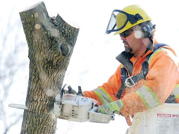 Oshawa tree damage
