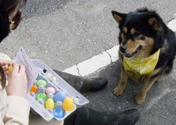 Julie Wojteczko cracks open an Easter egg with a doggie treat while  her dog Zak patiently waits at the National Service Dog's annual Easter Egg Hunt for dogs. This year's event will take place Good Friday, April 18 at the Flower City Recreation Centre at 10 a.m.