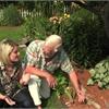 Your Life summer gardening: Importance of mulching