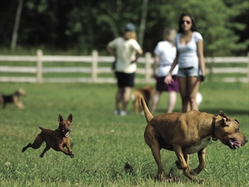 Fenced Dog Park Oshawa