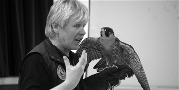 Peregrine falcon has valuable story to tell– Image 1