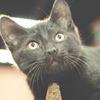 Pet of the Week - Pet Valu