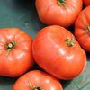 Vegatable Garden Tips