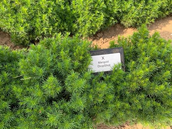 Kathy Renwald: Seeds of seduction at William Dam in West Flamborough