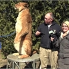 Amazing Animals: Meet Athena the lioness from Bowmanville Zoo
