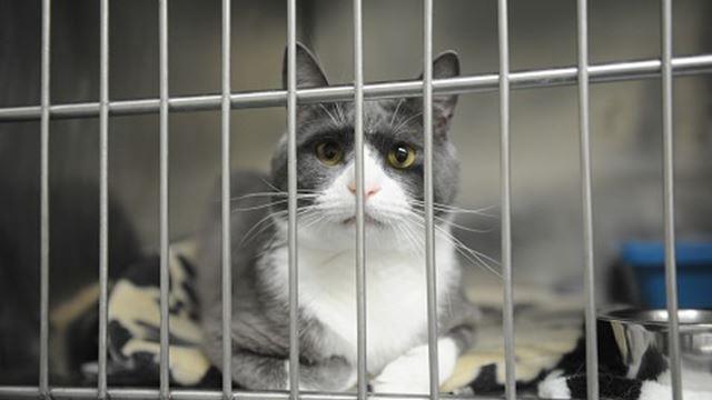 Oakville Cat Adoption