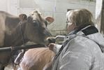 Caledonia Jersey farmers get a move on