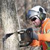 Oshawa tackling emerald ash borer damage to Second Marsh, naturalized areas