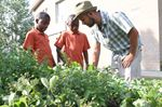 Oakville community garden is a growing partnership