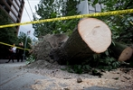 Thousands still without power southwest B.C.-Image1