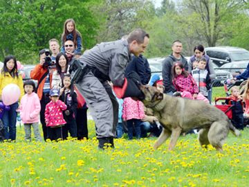 York Regional Police Service Dog Jax and Const. Peter Nyagi show their skills at the open house to start Police Week May 11 at the Community Safety Village in Stouffville.