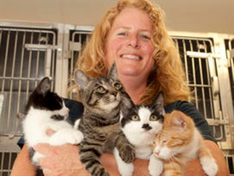 Brampton Animal Shelter Cats For Adoption