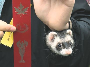 A ferret up his sleeve