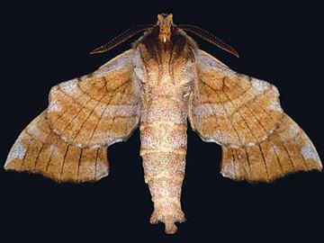 Moths at large