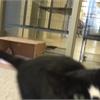 Pet of the week: Logan