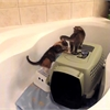 Funny pet video of the day: Five kittens in a bathtub