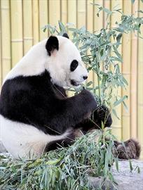 Metro Toronto Zoo 40th. Anniversary weekend