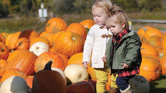 Pingles pumpkins