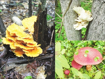 Take your five senses for a walk in the woods Oct. 18– Image 1