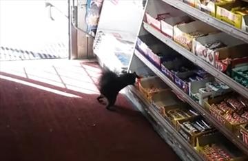 Squirrelly squirrel