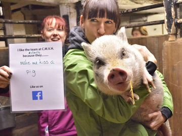Caledon Mountain Veterinary Hospital veterinarian Meredith Geldart was the winner of the Kiss the Pig contest at the local clinic. The yearly fundraiser supports the Farley Foundation, which helps fund vet bills for families in need.