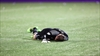 Toronto FC 'keeper Irwin out for six weeks-Image1